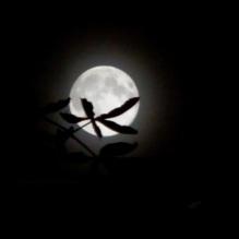 Buckeye Moon